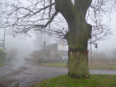Coalway Oak tree
